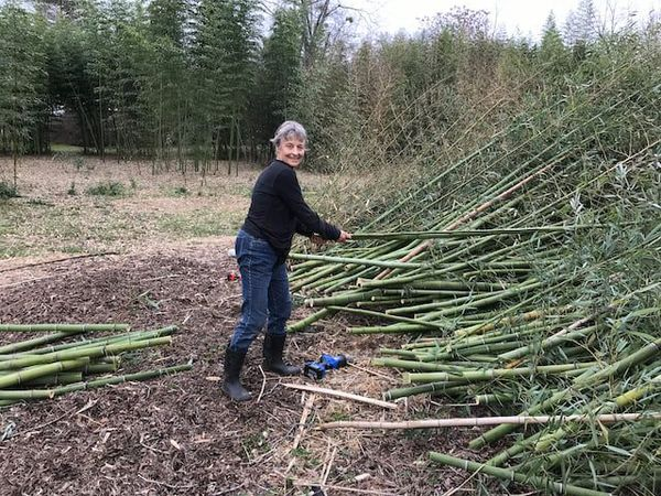 Daphne Lewis with Bamboo Poles